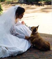 Corgi Bride